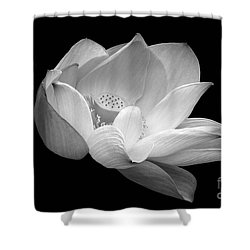 Indian Sacred Lotus In Black And White Shower Curtain