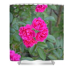 Indiana Roses Shower Curtain by Alys Caviness-Gober