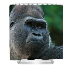 Indifference Shower Curtain by Judy Whitton
