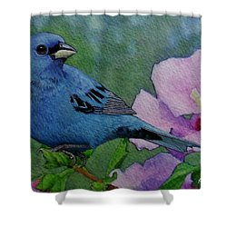 Indigo Bunting No 1 Shower Curtain