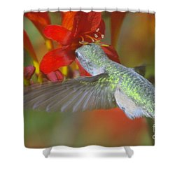 Indulgence  Shower Curtain by Jeff Swan