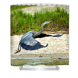 Inflight Great Blue Heron Shower Curtain by Sandi OReilly