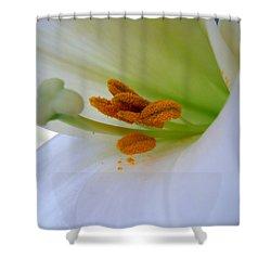 Inner Secrets Shower Curtain by Judy Hall-Folde