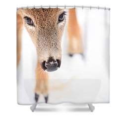 Innocent Eyes Shower Curtain by Karol Livote