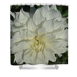 Shower Curtain featuring the photograph Innocent White Dahlia  by Susan Garren