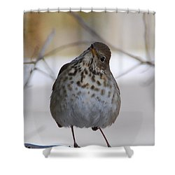 Shower Curtain featuring the photograph Inquisitive Hermit Thrush by Cascade Colors