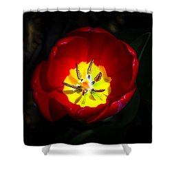 Inside A Tulip Shower Curtain