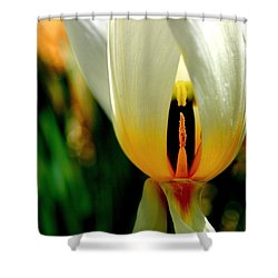 Inside Out Shower Curtain by Rona Black
