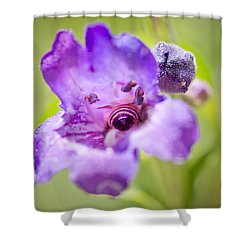 Shower Curtain featuring the photograph Inside by Priya Ghose