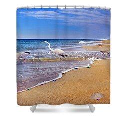 Inspiring Ibis Egret Sandpiper Starfish Sand Dollars  Shower Curtain