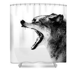 Intense Gray Wolf Portrait  Shower Curtain
