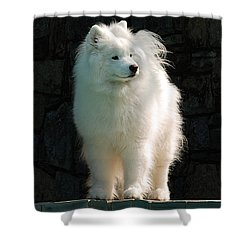 Intent Shower Curtain by Lois Bryan