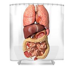 Internal Organs Of The Respiratory Shower Curtain by Leonello Calvetti