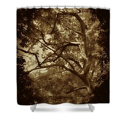 Into The Dark Wood Shower Curtain