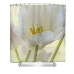 Into The Light Shower Curtain by Kim Hojnacki