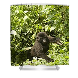 Shower Curtain featuring the photograph Into The Light by Liz Leyden