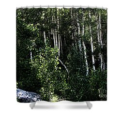 Into The Woods Shower Curtain by Bedros Awak