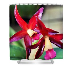 Intrageneric Brassia Hybrid Orchid Shower Curtain by Chris Flees