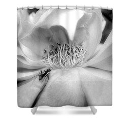 Intrigue Rose In Black And White Shower Curtain by Louise Kumpf