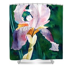 Iris 1 Shower Curtain by Marilyn Jacobson