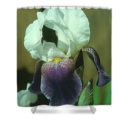 Iris 3 Shower Curtain