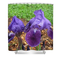 Shower Curtain featuring the photograph Iris After Rain by Katie Wing Vigil