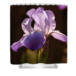 Iris Aglow Shower Curtain by Rona Black