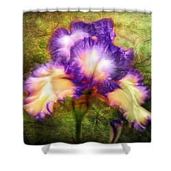 Iris Beauty Shower Curtain by Lilia D
