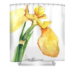 Iris Blooms  Shower Curtain by Sherry Harradence