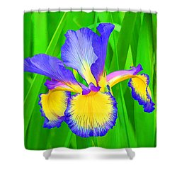 Iris Blossom Shower Curtain by Teresa Zieba