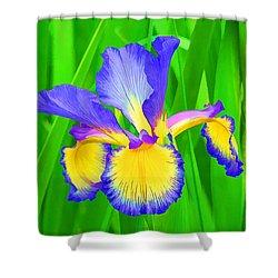 Iris Blossom Shower Curtain