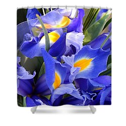 Iris Blues In New Orleans Louisiana Shower Curtain