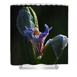 Iris Emerging  Shower Curtain