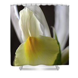 Shower Curtain featuring the photograph Iris Flower by Joy Watson