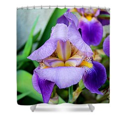 Iris From The Garden Shower Curtain