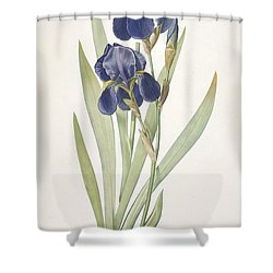 Iris Germanica Bearded Iris Shower Curtain by Pierre Joseph Redoute