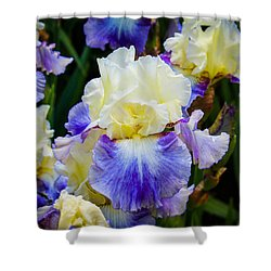 Shower Curtain featuring the photograph Iris In Blue And Yellow by Patricia Babbitt
