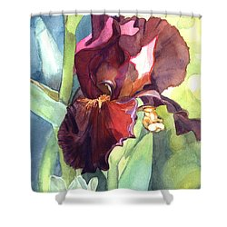 Iris In Red And Burgundy Shower Curtain by Greta Corens