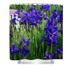 Shower Curtain featuring the photograph Iris In The Field by Kay Novy