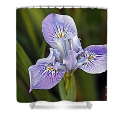 Shower Curtain featuring the photograph Iris by Kate Brown