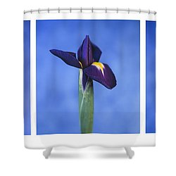 Iris Shower Curtain by Lana Enderle
