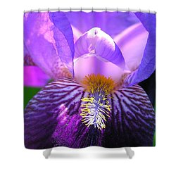 Iris Light Shower Curtain