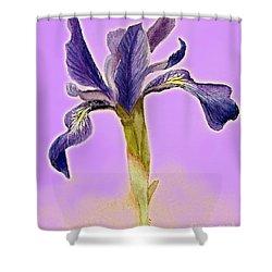 Iris On Lilac Shower Curtain