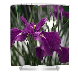 Iris On Pond's Edge Shower Curtain by Penny Lisowski