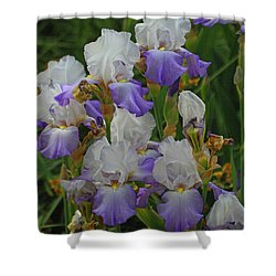 Iris Patch At The Arboretum Shower Curtain by Tom Janca