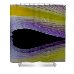 Iris Petal Reflected Shower Curtain