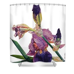 Iris Rhapsody Shower Curtain by Greta Corens