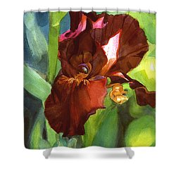 Watercolor Of A Tall Bearded Iris In Sienna Red Shower Curtain