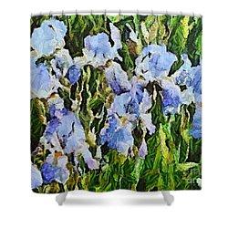 Irises Shower Curtain by Dragica  Micki Fortuna