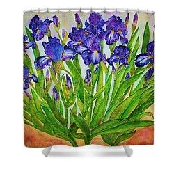 Irises Shower Curtain by Janet Immordino